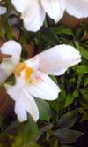 Image382